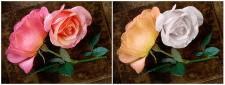 2 розы