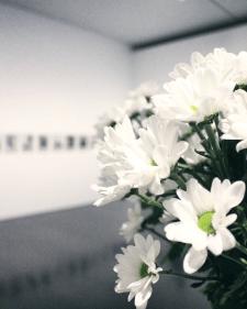 Цветы на светлом фоне