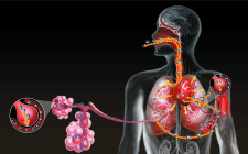 Иллюстрация для журнала по анатомии