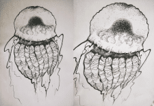 Медуза, гелевая ручка А4