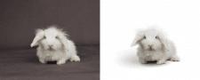 Обтравка кролика