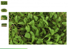 Добавление микрозелени на сайт