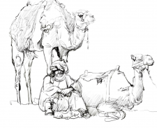 бедуин и верблюды