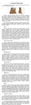 Тексты для каталога сигарилл