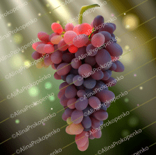 Виноград Adobe Illustrator