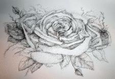 Роза на открытку