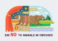 Скажи ні! тваринам в цирку