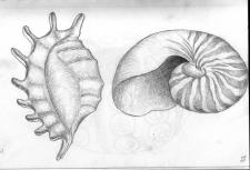 Морской набор. Ракушки.