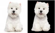 вырезать белую собаку с белого фона