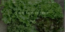 Онлайн магазин по продаже салатов