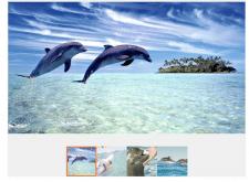 Дельфины ненавидят людей
