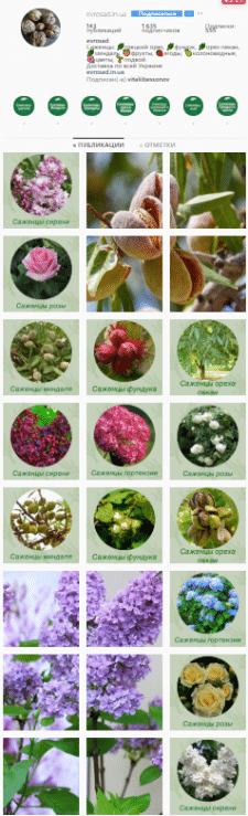 Интернет магазин саженцев деревьев, ягод и цветов