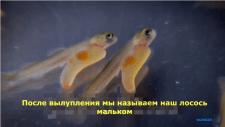 Перевод и создание субтитров