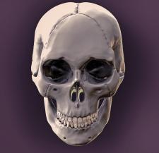 3д модель черепа