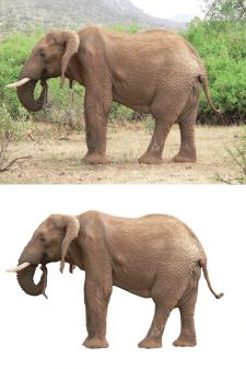 Удаление фона - Слоны