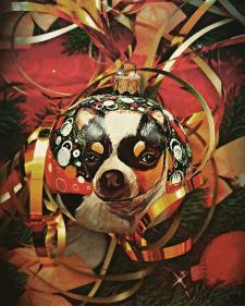 Любимая собачка на удачный год