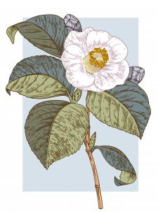 ботаническая иллюстрация, вектор