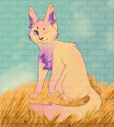 Кот в поле