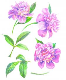 Ботанічні замальовки