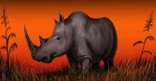 носорог в траве