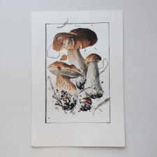Акварельная ботаническая иллюстрация