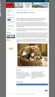 Собака в доме: радость и масса забот