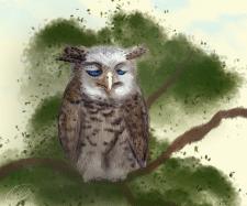2d art illustration/owlonbranch