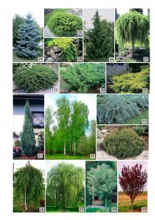 Предлагаемые растения к проекту