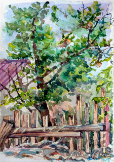 Watercolor. Apple tree and old fence.