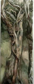 Кавказское дерево