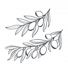 Иллюстрация ветки оливы