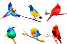 Птицы Африки