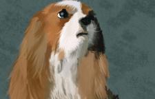 Отрисовка собаки в Photoshop кистями