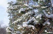 Фоторепортаж о зимнем парке