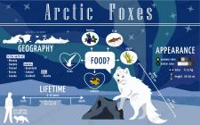 Інфографіка з використанням власних ілюстрацій