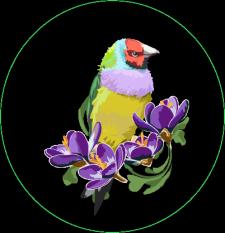 птица иллюстратор