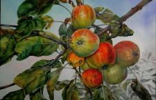 Яблоки в моем саду
