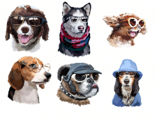 Собачки в окулярах