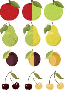 Садові фрукти