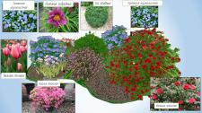 Ассортимент растений для проекта озеленения