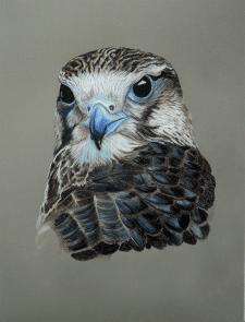 Птица, цветные карандаши