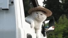 Кот или не кот
