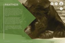 Panther Web Design Study