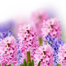 Коллаж цветы