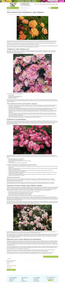 Чем отличаются розы (цветы, сад, огород)
