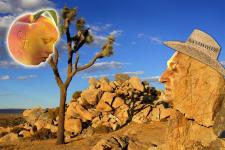 "Коллаж ""Пустыня"""