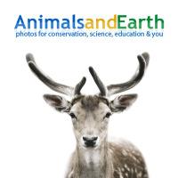 Научная социальная сеть «Animalsandearth»