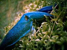 Високогірні молюски – прихована екзотика Карпат