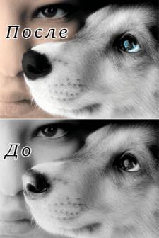 Придаем цвет черно-белому фото