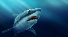 Иллюстрация акулы